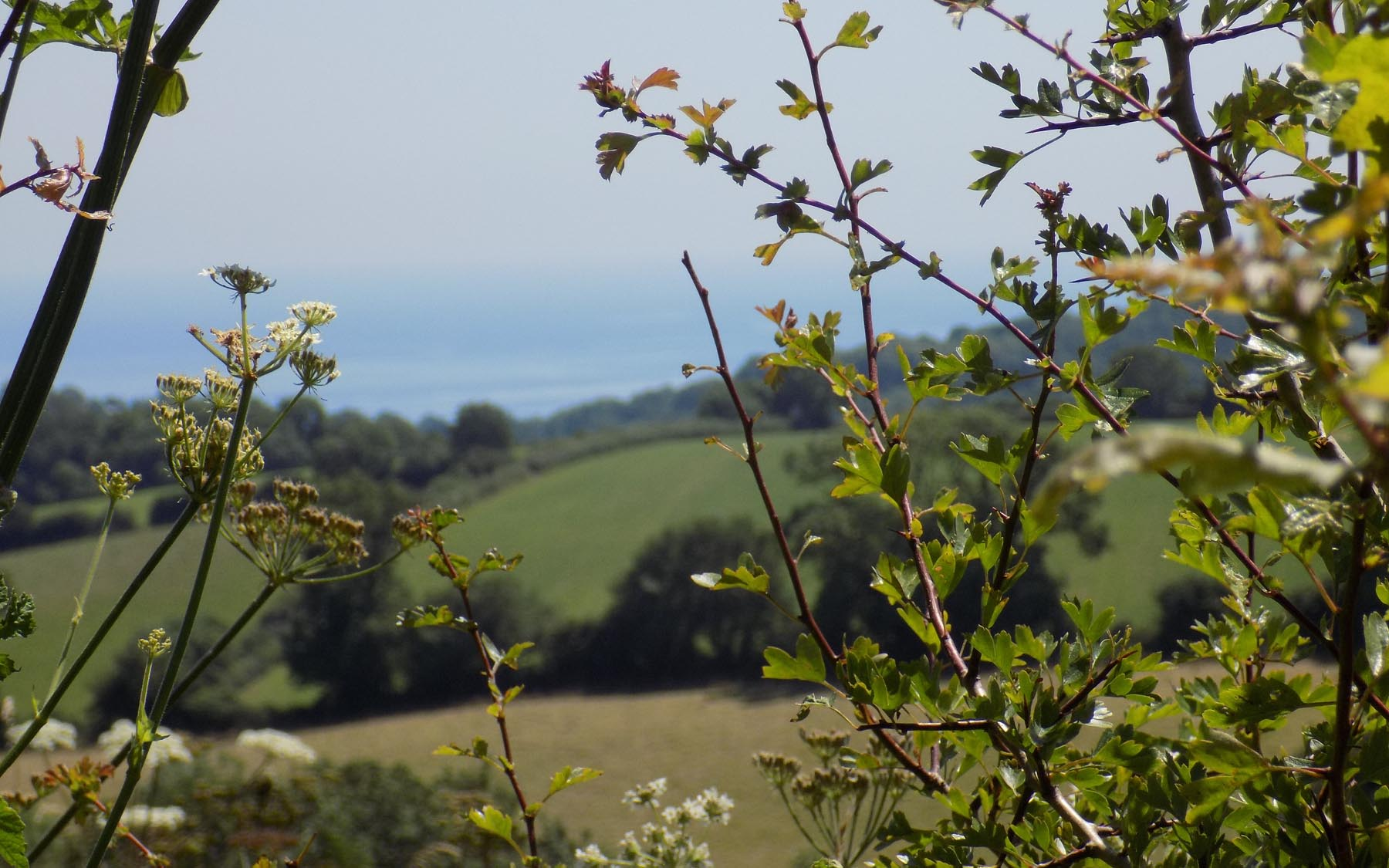 Fields and sea