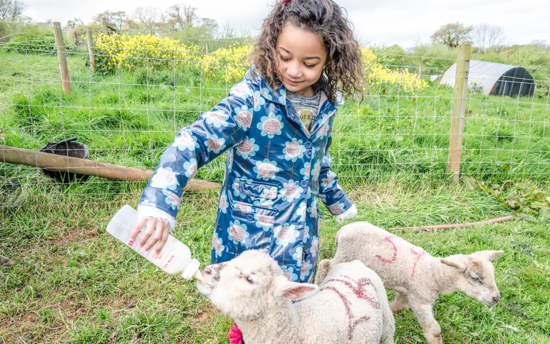 Animal interactions at Occombe Farm