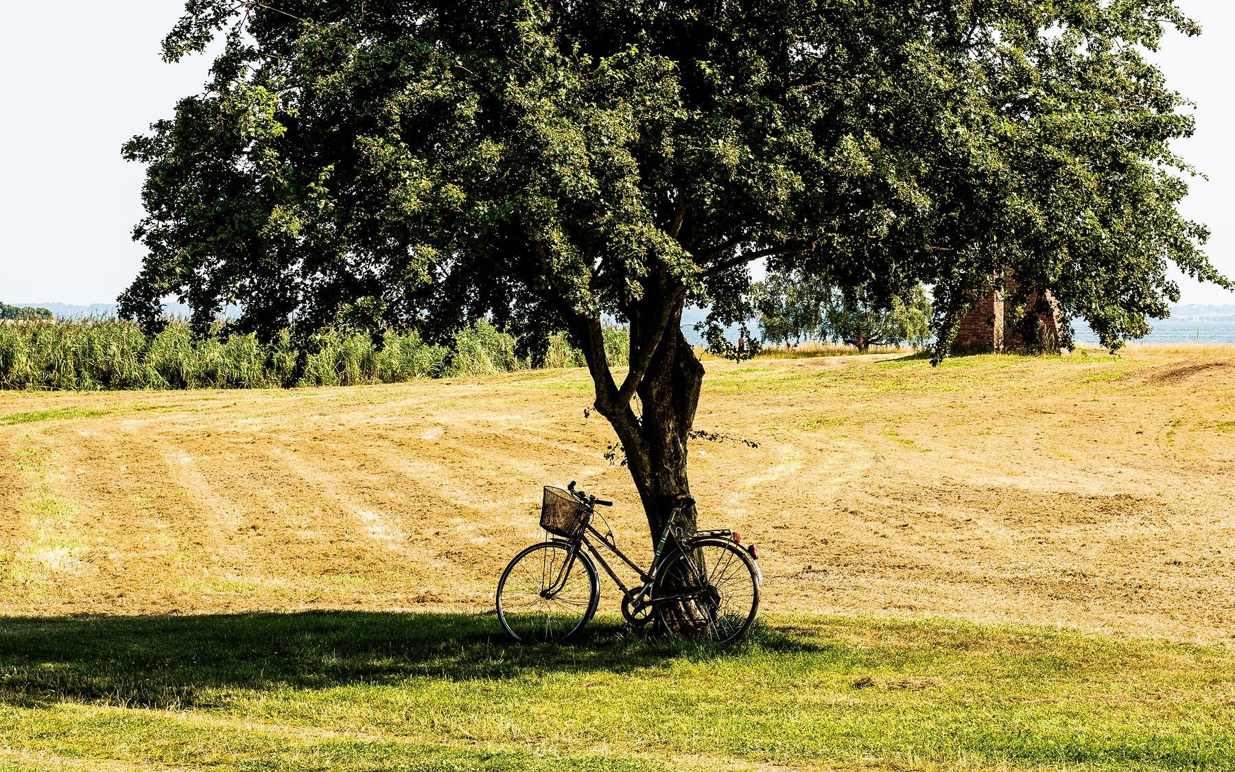 Bike in field by tree