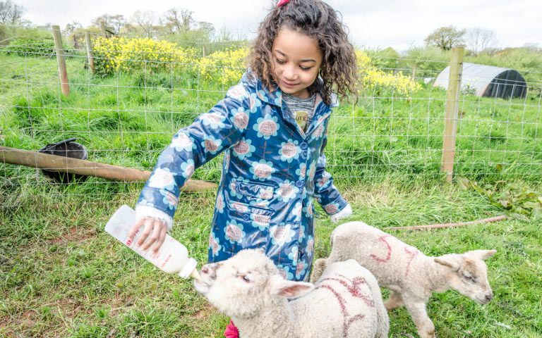 Animal interactions at Occombe Farm