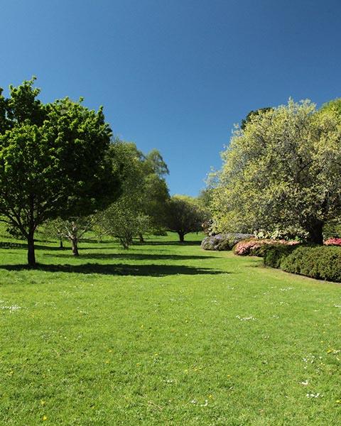 Cockington garden view