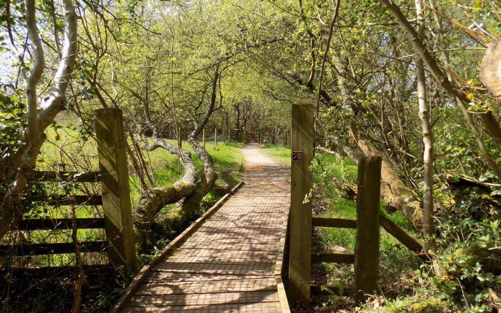 Occombe Farm trail