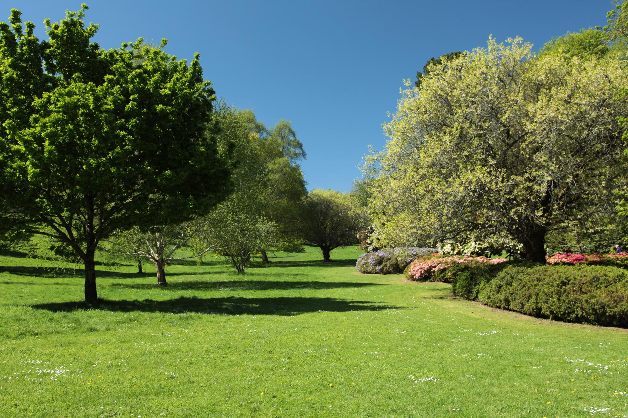 Cockington Arboretum