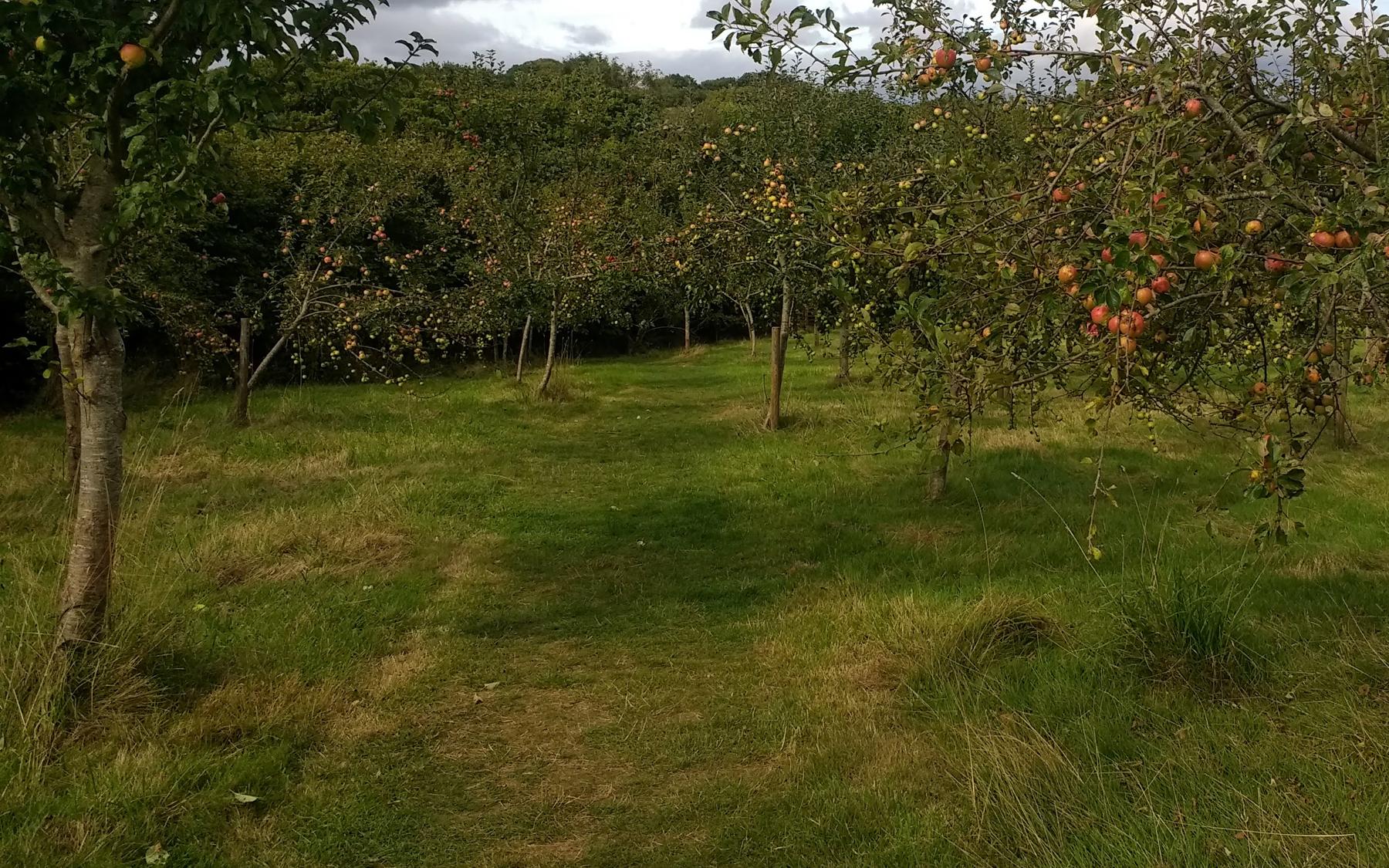 Occombe Farm orchard