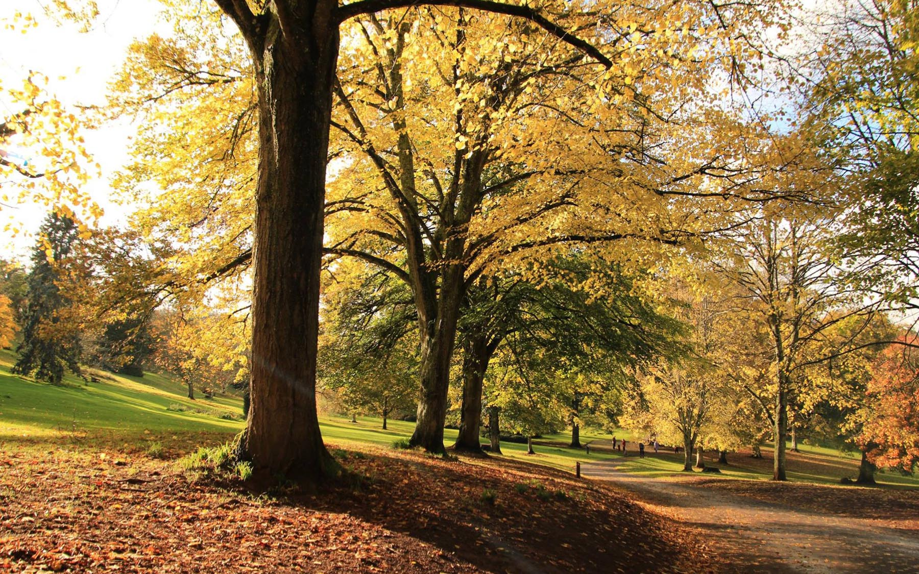 Autumn walk at Cockington