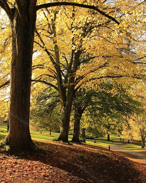 Autumn at Cockington